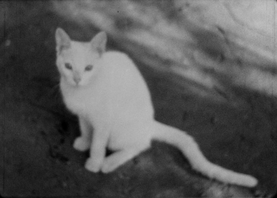 A White Cat